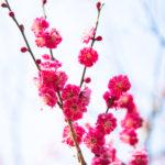 もうすぐ春ですね。