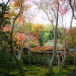 紅葉見頃な嵐山を満喫!