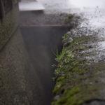 雨のフォトクエストツアー