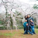 桜撮影 2018