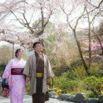 桜の嵐山!