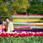 万博公園の花畑