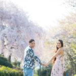 地元で貸切の桜撮影!