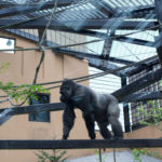 京都動物園