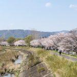 近所の桜スポットを発見!